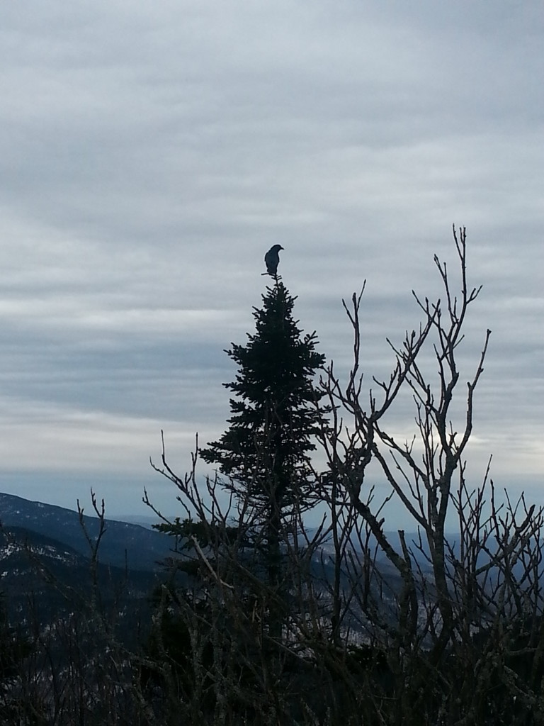 Hello birdy.